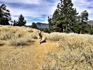 Trail dog-pups-outdoor fitness