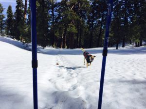 Snowshoe-dog-Big bear-Valentine's Day