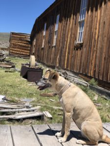 Bodie State Historic Park,